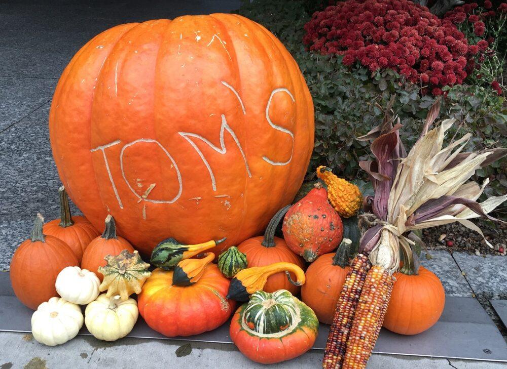 tom pumpkin event