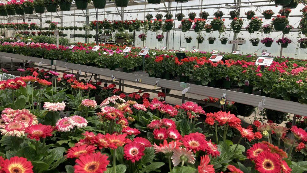 greeenhouse flowers